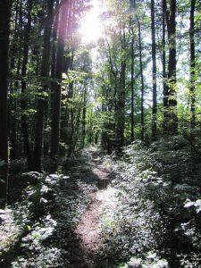 Das Licht am Ende des dunklen Tunnels des Narzissmus - Waldlichtung mit Sonnenstrahlen
