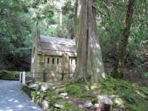 Energetische Reinigung - Kapelle hinter Baum in einem Wald, der Boden ist mit Moos bedeckt.