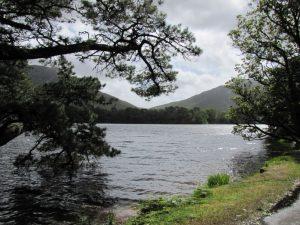 Wasseradern entstören - Baum am See und zwei Bergen im Hintergrund
