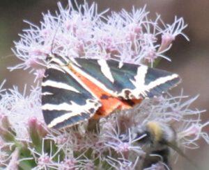 Vom Co-Narzissmus zum Schmetterling