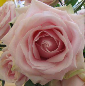 Rosen sind eine wundervolle Therapiemethode für die Seele.