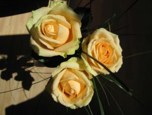 Drei gelbe Rosen für Susanne als keines Dankeschön für ihr liebevolles feedback.