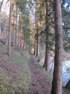 Waldpfad am See - Als Dank an Martin für die liebevolle Resonanz.
